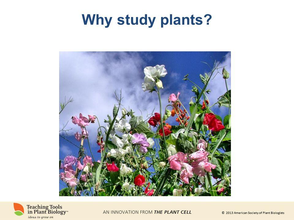 © 2013 American Society of Plant Biologists Hunger Wir brauchen Vitamine, Mineralien und Kalorien.