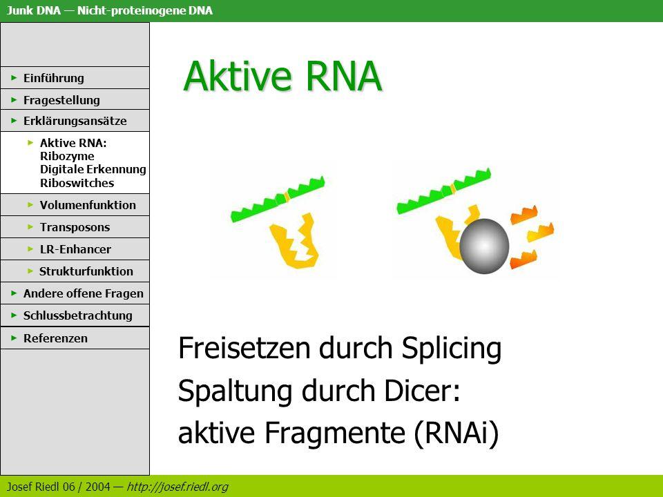 Junk DNA Nicht-proteinogene DNA Josef Riedl 06 / 2004 http://josef.riedl.org Aktive RNA Einführung Fragestellung Erklärungsansätze Aktive RNA: Ribozym