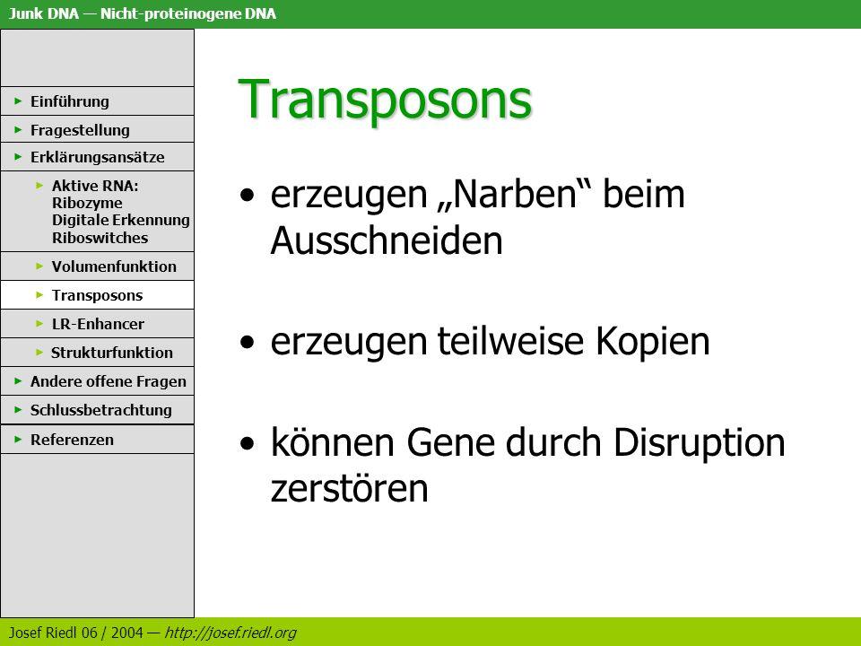 Junk DNA Nicht-proteinogene DNA Josef Riedl 06 / 2004 http://josef.riedl.org Transposons erzeugen Narben beim Ausschneiden erzeugen teilweise Kopien k