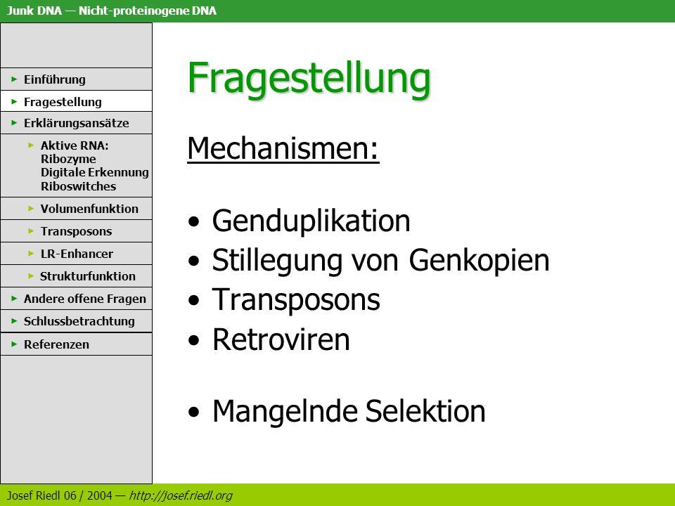 Junk DNA Nicht-proteinogene DNA Josef Riedl 06 / 2004 http://josef.riedl.org Transposons: Bewertung eindeutig nachgewiesen fehlende Selektion.