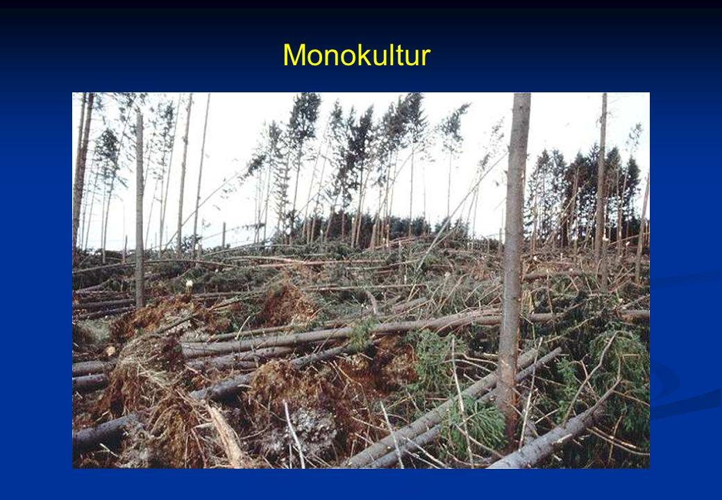 Monokultur