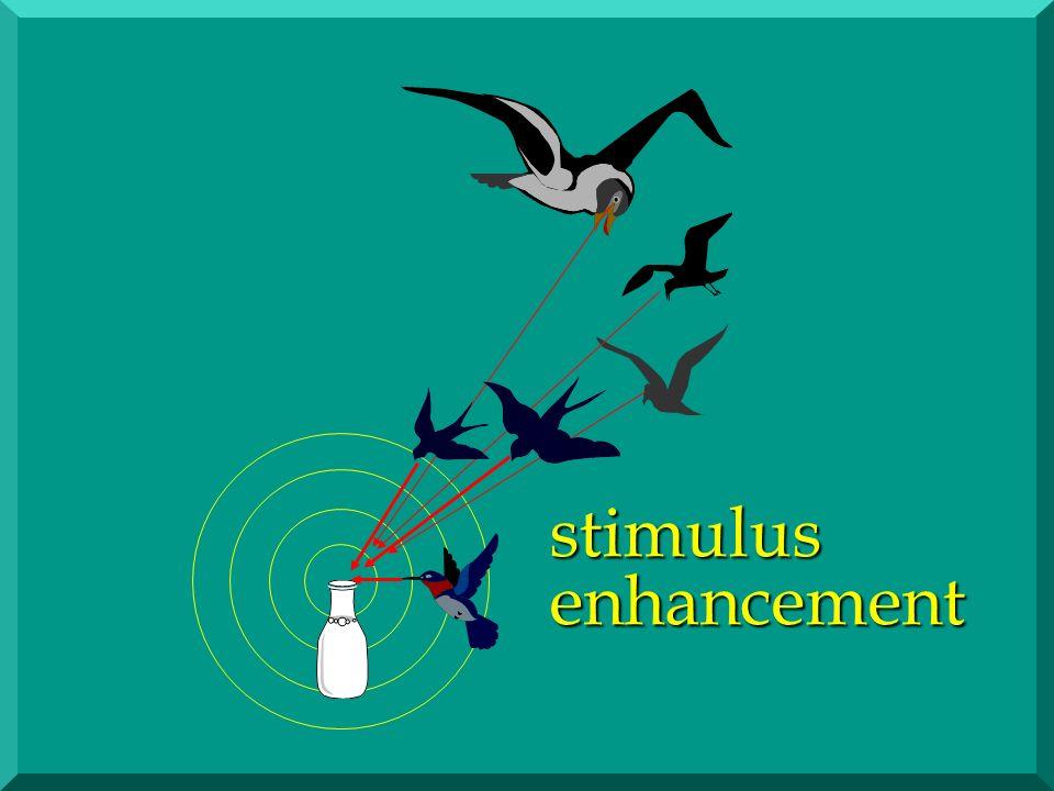 Akustisch vermittelte Nachahmung Mechanismus der Gefühlsübertragung: Assoziation (Schon bei Vögeln)