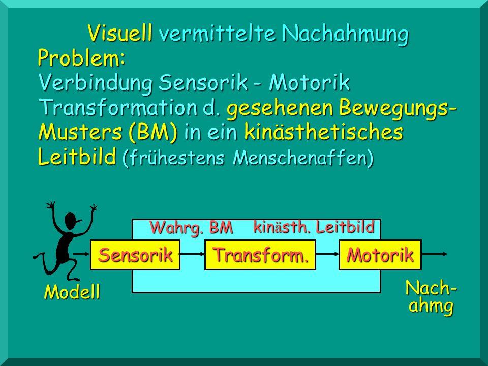 Visuell vermittelte Nachahmung Problem: Verbindung Sensorik - Motorik Transformation d. gesehenen Bewegungs- Musters (BM) in ein kinästhetisches Leitb