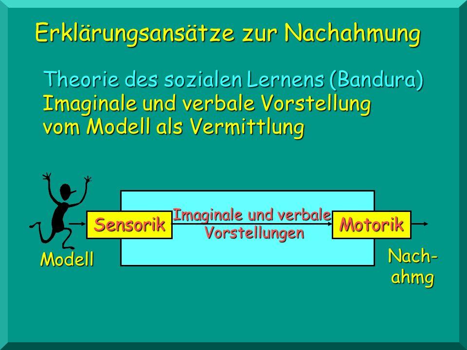 Erklärungsansätze zur Nachahmung Theorie des sozialen Lernens (Bandura) Imaginale und verbale Vorstellung vom Modell als Vermittlung SensorikMotorik I