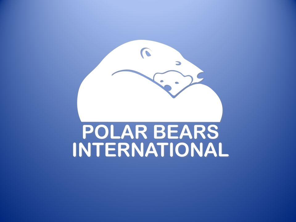 Wilde Eisbären legen die größten Strecken, aller nicht-land- Säugetiere, zurück.