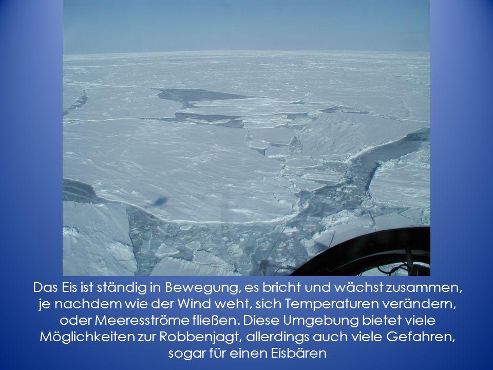 Das Eis ist ständig in Bewegung, es bricht und wächst zusammen, je nachdem wie der Wind weht, sich Temperaturen verändern, oder Meeresströme fließen.