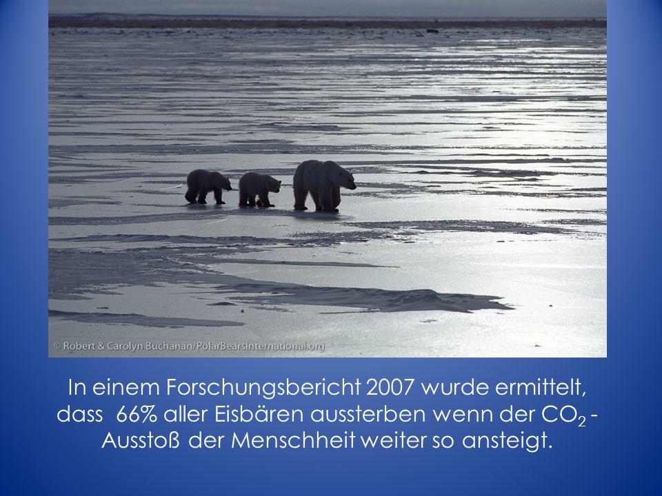 In einem Forschungsbericht 2007 wurde ermittelt, dass 66% aller Eisbären aussterben wenn der CO 2 - Ausstoß der Menschheit weiter so ansteigt.