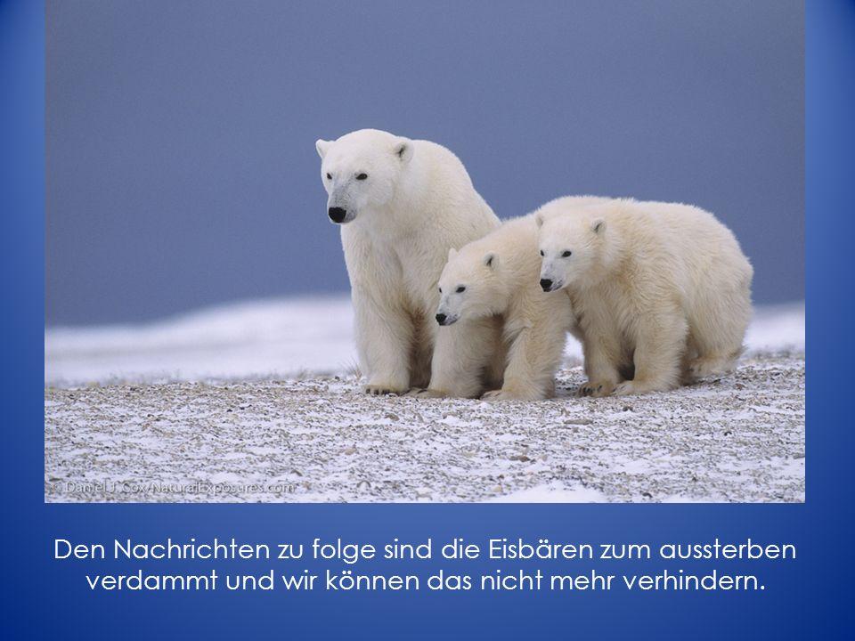 Den Nachrichten zu folge sind die Eisbären zum aussterben verdammt und wir können das nicht mehr verhindern.