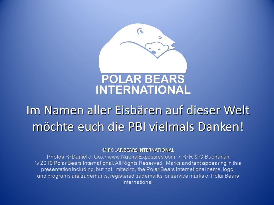 Im Namen aller Eisbären auf dieser Welt möchte euch die PBI vielmals Danken! © POLAR BEARS INTERNATIONAL Photos: © Daniel J. Cox / www.NaturalExposure