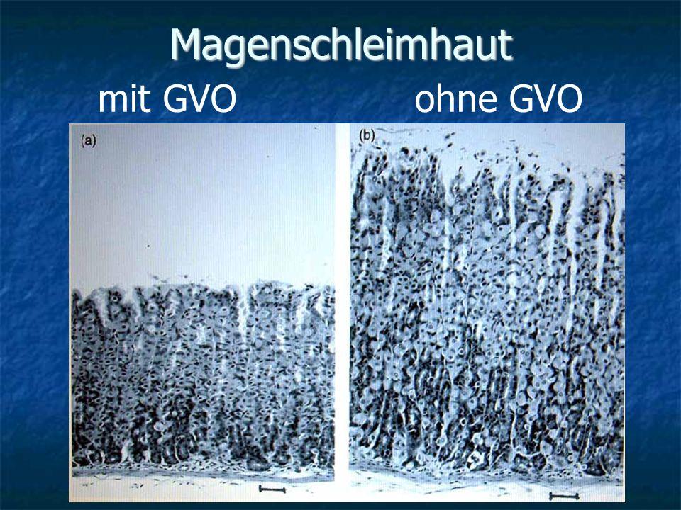 Magenschleimhaut mit GVO ohne GVO