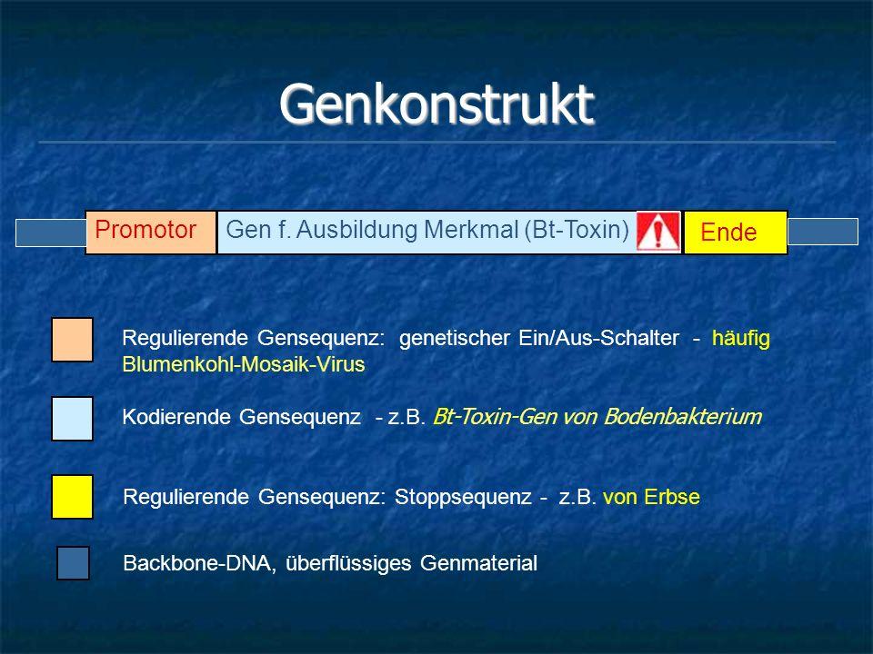 Genkonstrukt PromotorGen f. Ausbildung Merkmal (Bt-Toxin) Ende Regulierende Gensequenz: genetischer Ein/Aus-Schalter - häufig Blumenkohl-Mosaik-Virus