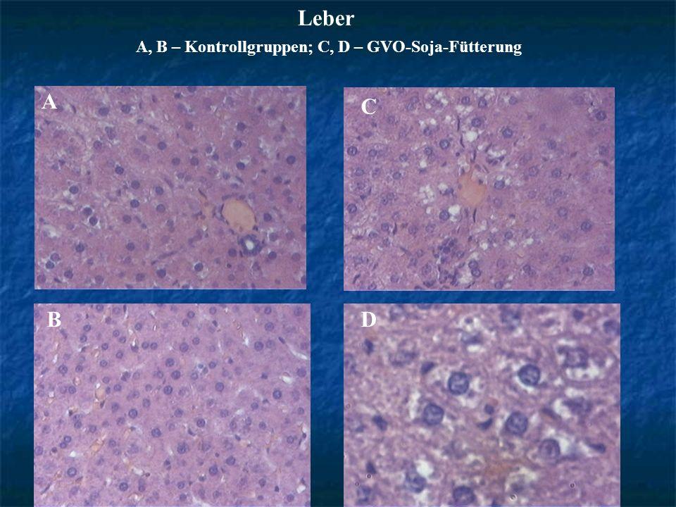 Leber А, B – Kontrollgruppen; C, D – GVO-Soja-Fütterung B А C D