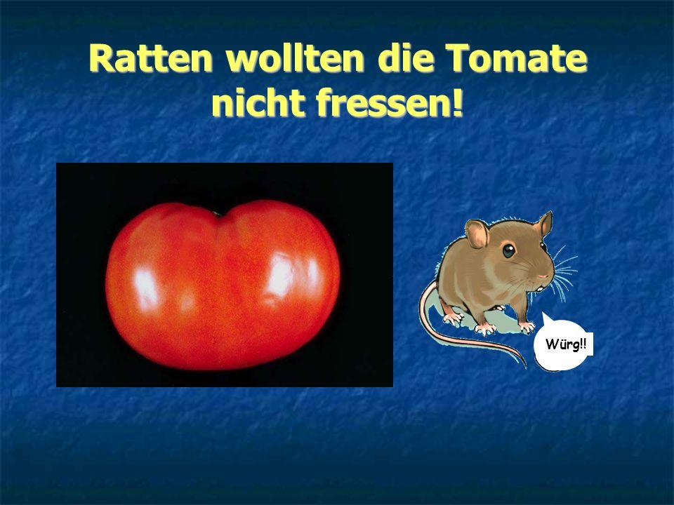 Ratten wollten die Tomate nicht fressen! Würg!!