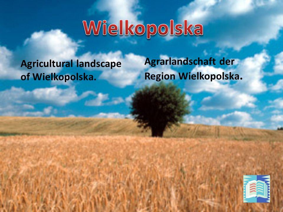 Agrarlandschaft der Region Wielkopolska. Agricultural landscape of Wielkopolska.