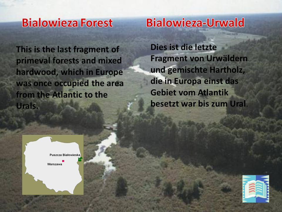 Dies ist die letzte Fragment von Urwäldern und gemischte Hartholz, die in Europa einst das Gebiet vom Atlantik besetzt war bis zum Ural.
