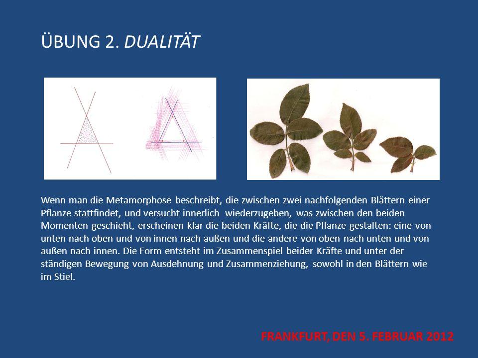 ÜBUNG 2. DUALITÄT Wenn man die Metamorphose beschreibt, die zwischen zwei nachfolgenden Blättern einer Pflanze stattfindet, und versucht innerlich wie