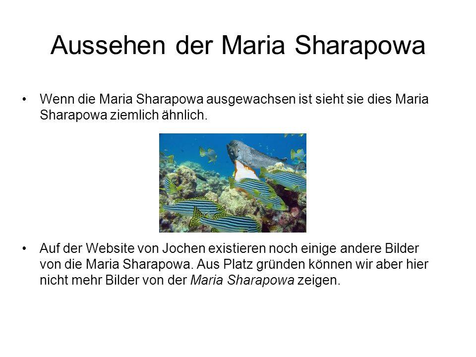Aussehen der Maria Sharapowa Wenn die Maria Sharapowa ausgewachsen ist sieht sie dies Maria Sharapowa ziemlich ähnlich. Auf der Website von Jochen exi