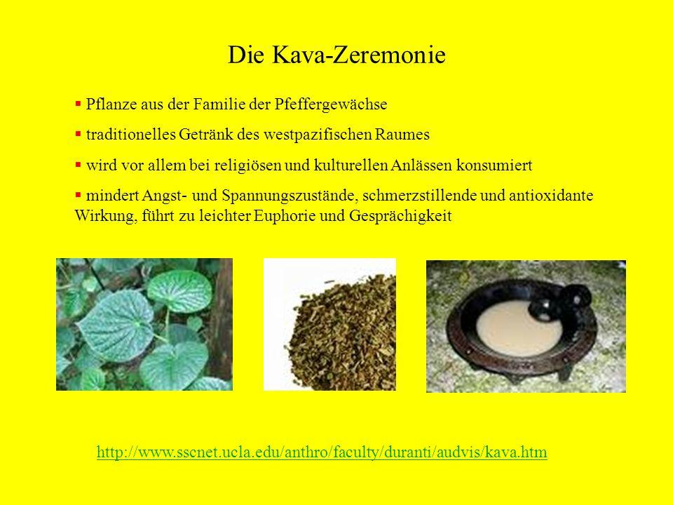 Die Kava-Zeremonie Pflanze aus der Familie der Pfeffergewächse traditionelles Getränk des westpazifischen Raumes wird vor allem bei religiösen und kul