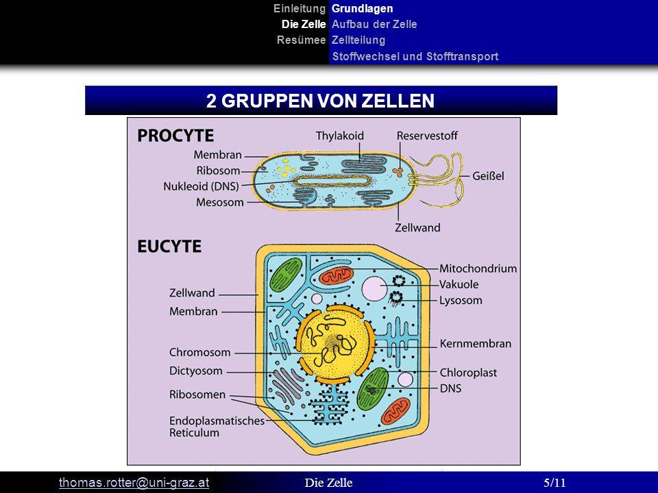 EinleitungGrundlagen Die ZelleAufbau der Zelle ResümeeZellteilung Stoffwechsel und Stofftransport thomas.rotter@uni-graz.at Die Zelle6/11