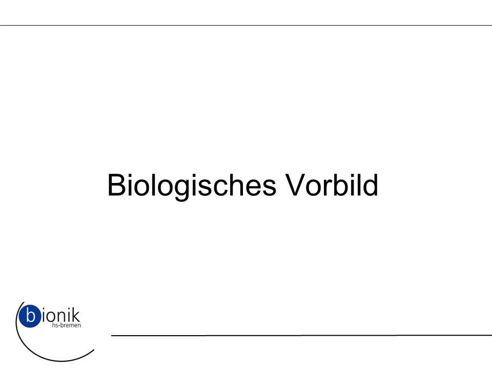 Biologisches Vorbild