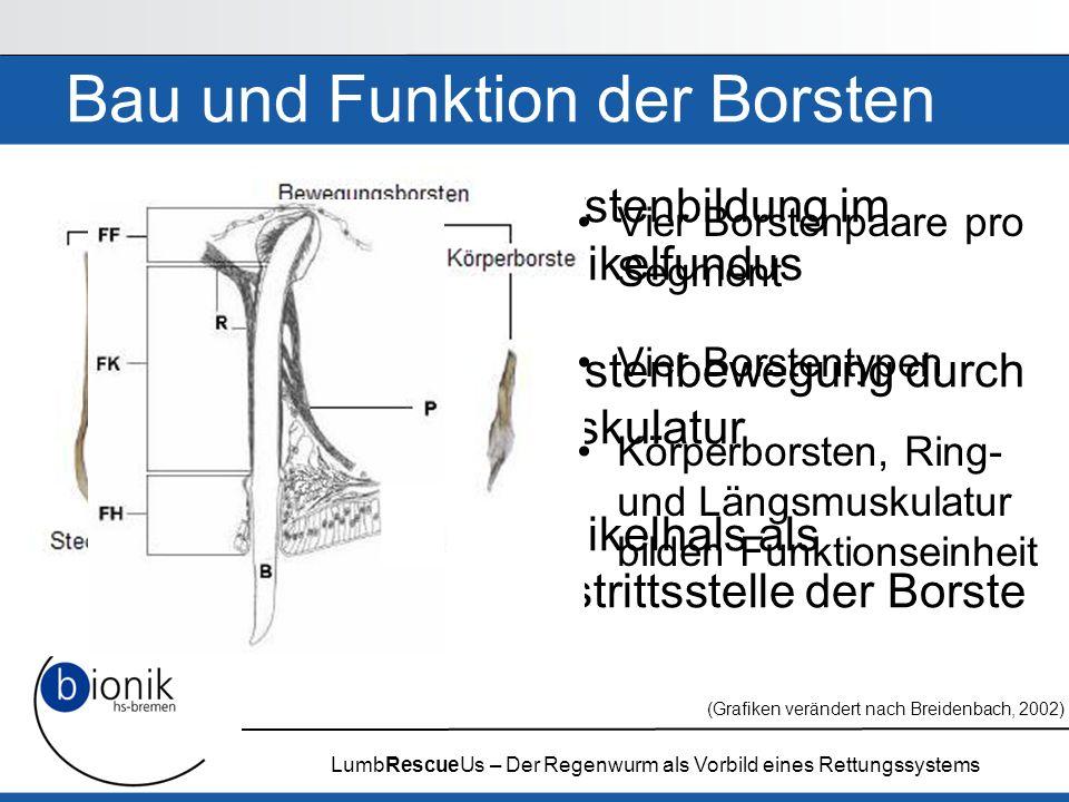 LumbRescueUs – Der Regenwurm als Vorbild eines Rettungssystems Umsetzung von Borsten & Motorik Vier Borsten pro Segment Linearmotor dient der Segmentstreckung und -stauchung