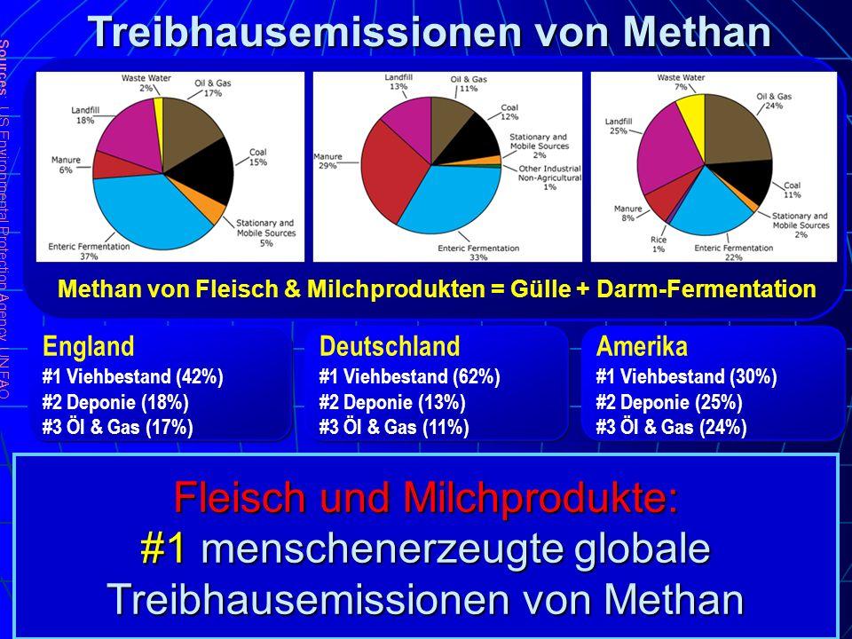 Fleisch und Milchprodukte: #1 menschenerzeugte globale Treibhausemissionen von Methan Sources : US Environmental Protection Agency, UN FAO England #1
