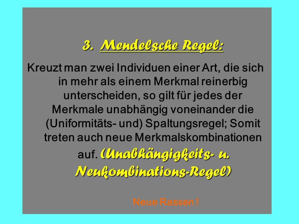 F1F1 x Kz. Gr GR gR gr GgRr Die 3. Mendelsche Regel (2) gelb-rund : gelb-kantig : grün-rund : grün-kantig = 9 : 3 : 3 : 1 GgRr GRGrgRgr GgRr ggRR F2F2