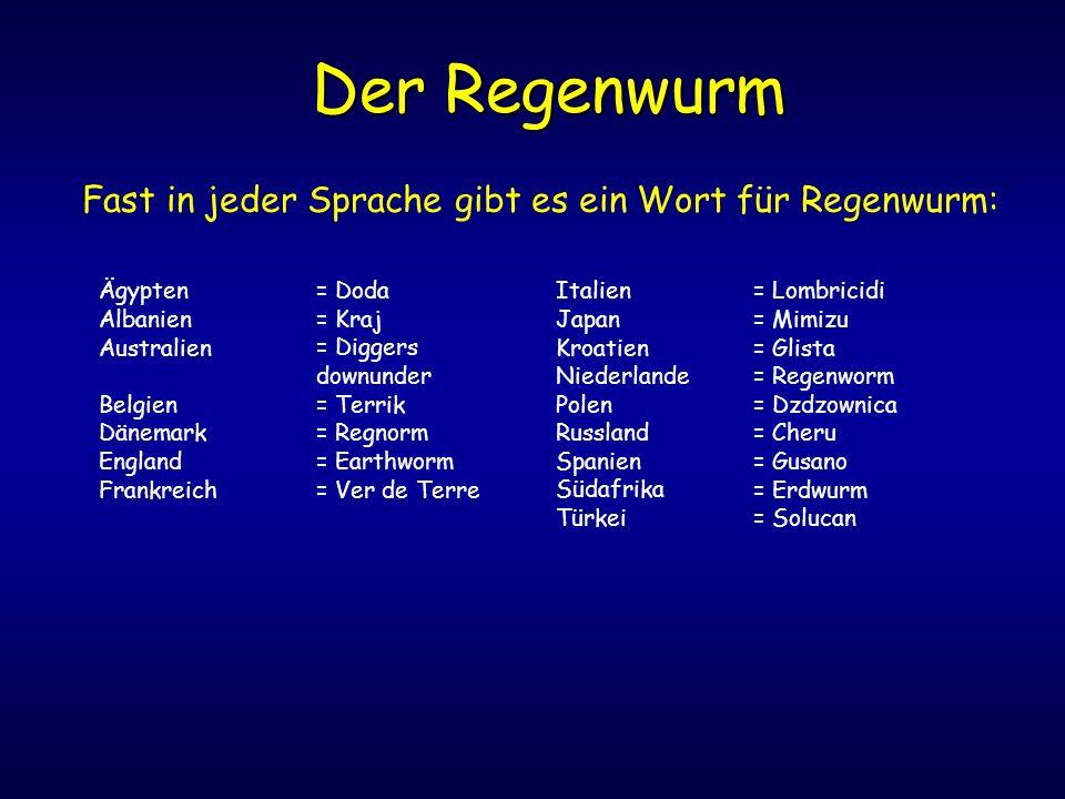 Der Regenwurm Fast in jeder Sprache gibt es ein Wort für Regenwurm: Ägypten Albanien Australien Belgien Dänemark England Frankreich = Doda = Kraj = Di