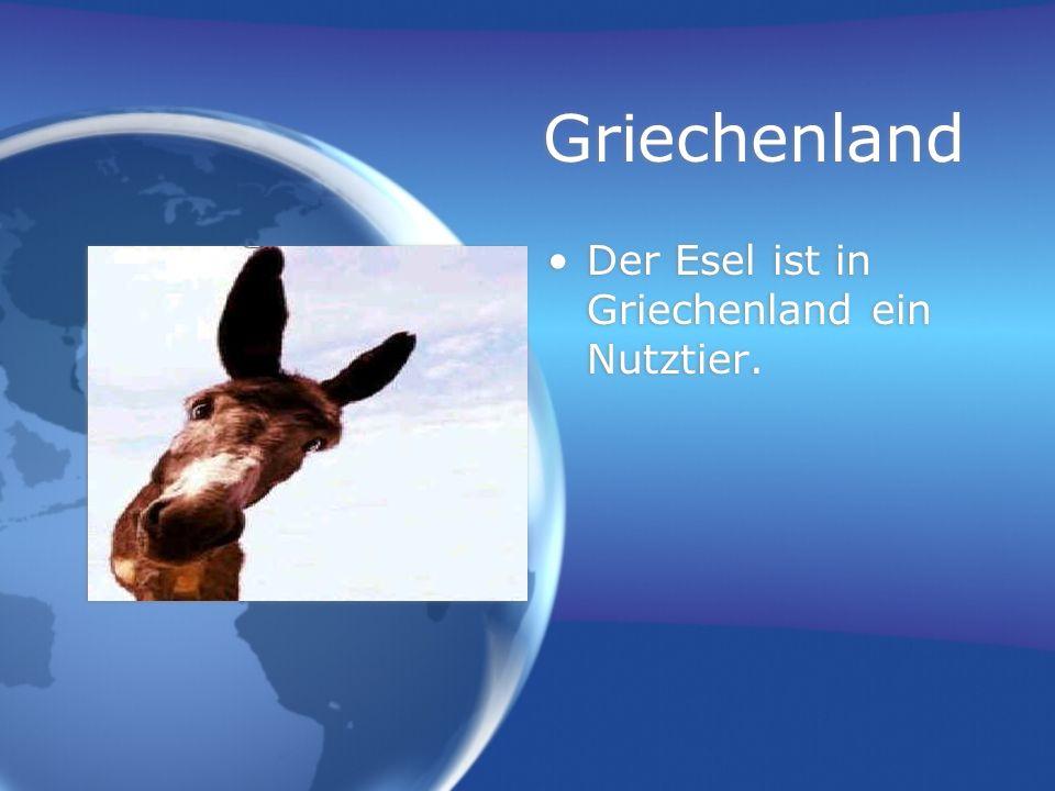 Griechenland Der Esel ist in Griechenland ein Nutztier.