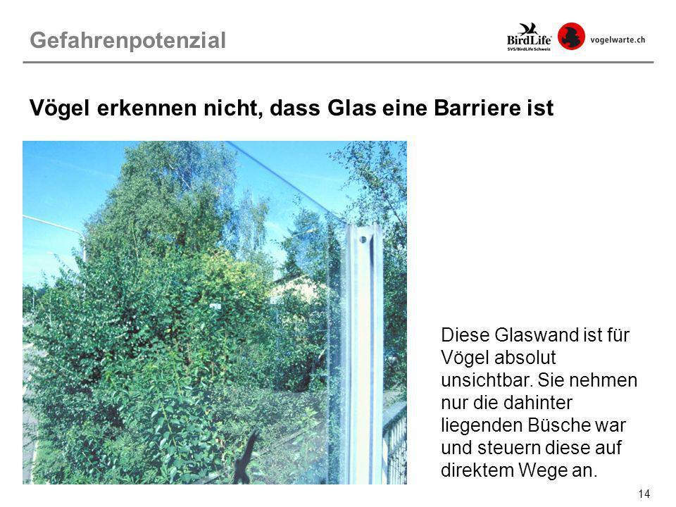 14 Vögel erkennen nicht, dass Glas eine Barriere ist Diese Glaswand ist für Vögel absolut unsichtbar. Sie nehmen nur die dahinter liegenden Büsche war