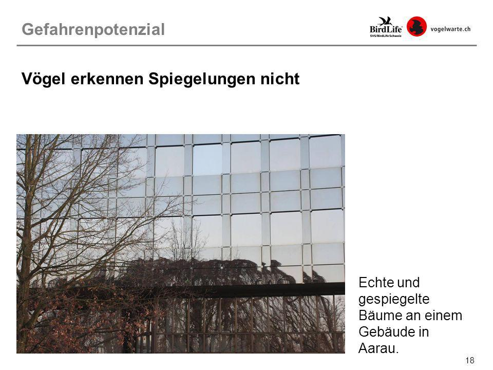 18 Echte und gespiegelte Bäume an einem Gebäude in Aarau. Gefahrenpotenzial Vögel erkennen Spiegelungen nicht