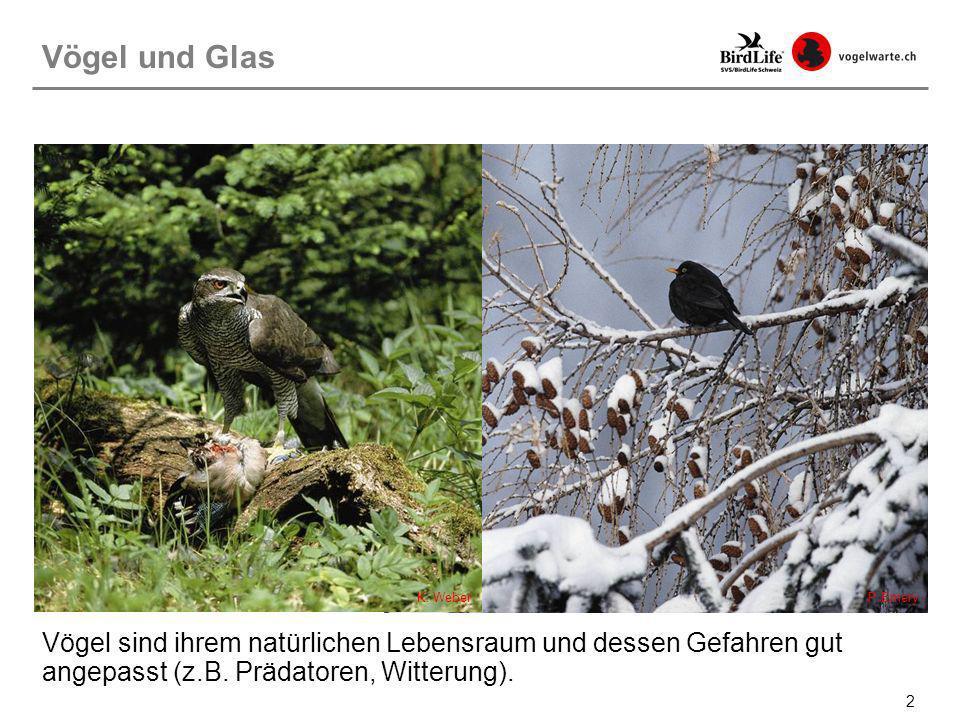 2 Vögel sind ihrem natürlichen Lebensraum und dessen Gefahren gut angepasst (z.B. Prädatoren, Witterung). Vögel und Glas P.EmeryK. Weber