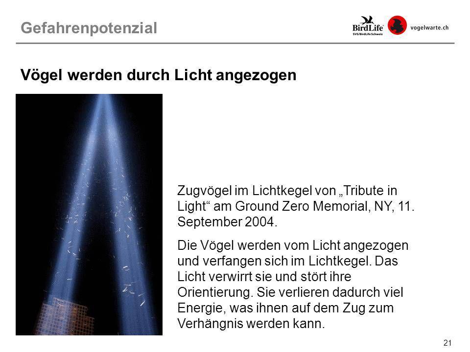 21 Zugvögel im Lichtkegel von Tribute in Light am Ground Zero Memorial, NY, 11. September 2004. Die Vögel werden vom Licht angezogen und verfangen sic