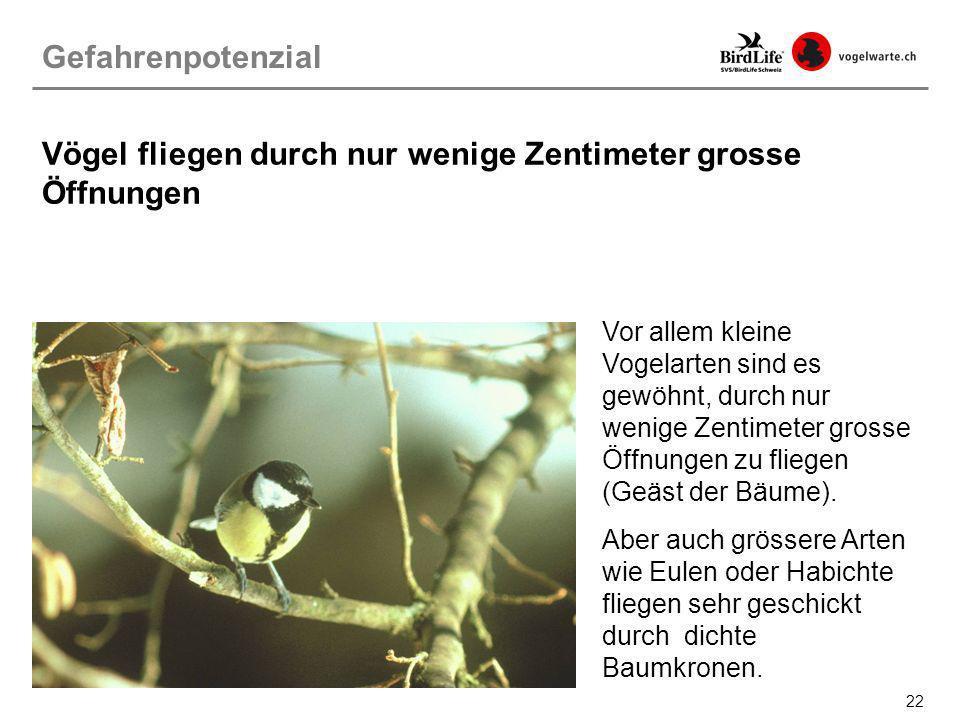 22 Vögel fliegen durch nur wenige Zentimeter grosse Öffnungen Vor allem kleine Vogelarten sind es gewöhnt, durch nur wenige Zentimeter grosse Öffnunge
