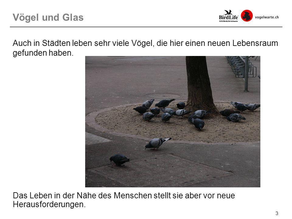 34 Vogelfreundliches Bauen: Reflexionsarmes Glas Möglichst reflexionsarmes Glas (Reflektionsgrad höchstens 15%).
