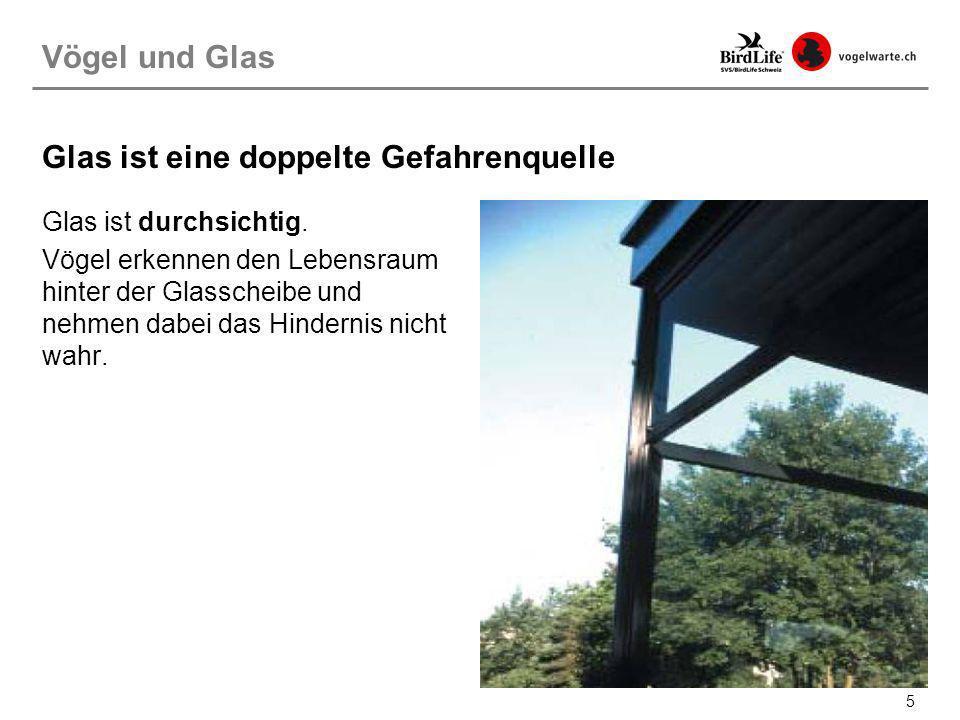 36 Sowohl für den Velounterstand wie für die Balkone wurde hier in der Neugutstrasse in Zürich Milchglas verwendet.