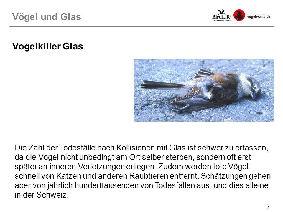 7 Vogelkiller Glas Die Zahl der Todesfälle nach Kollisionen mit Glas ist schwer zu erfassen, da die Vögel nicht unbedingt am Ort selber sterben, sonde