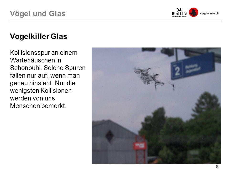8 Vogelkiller Glas Kollisionsspur an einem Wartehäuschen in Schönbühl. Solche Spuren fallen nur auf, wenn man genau hinsieht. Nur die wenigsten Kollis