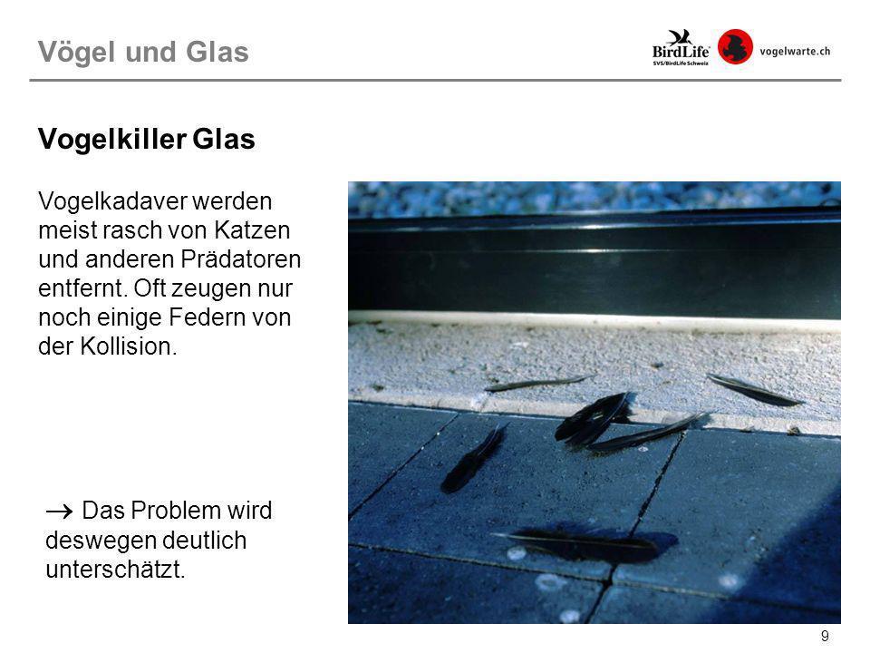 40 Museum Rietberg, Zürich Lösungsansätze: Materialien Vogelfreundliches Bauen: Materialien Ein kreatives Muster, welches die Spiegelung unterbricht und den Vögeln das Glas sichtbar macht.