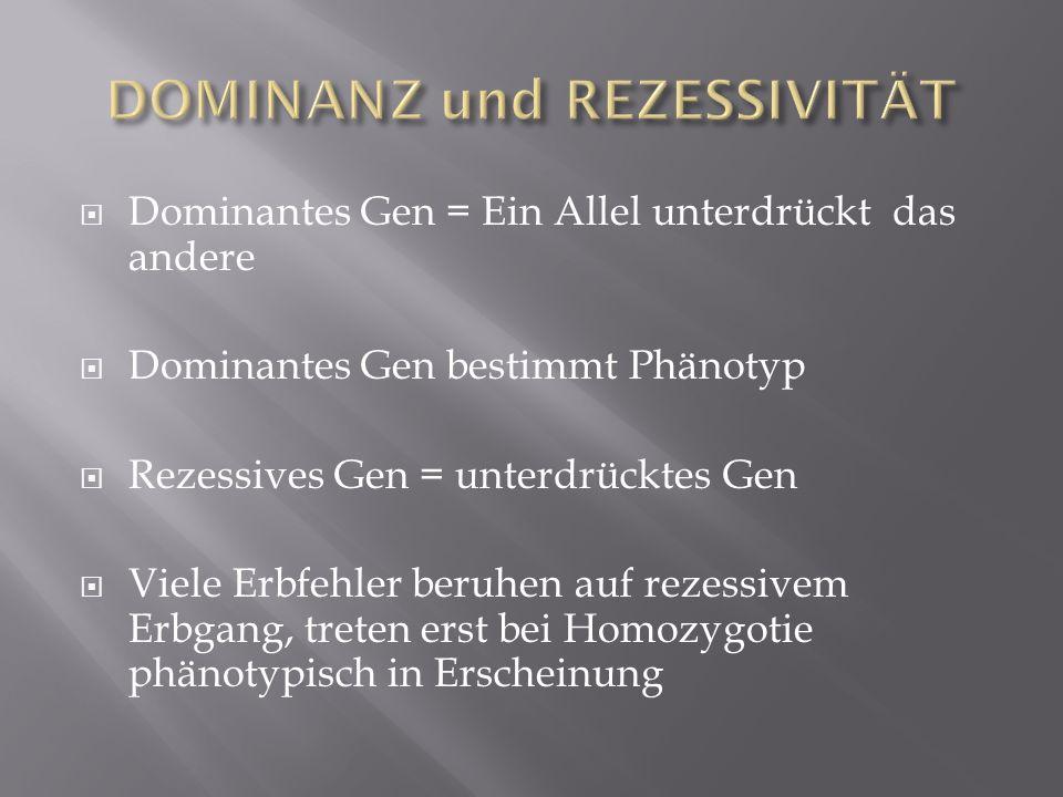 Dominantes Gen = Ein Allel unterdrückt das andere Dominantes Gen bestimmt Phänotyp Rezessives Gen = unterdrücktes Gen Viele Erbfehler beruhen auf reze