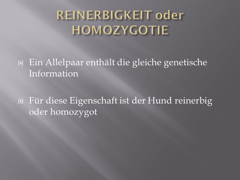 Ein Allelpaar enthält die gleiche genetische Information Für diese Eigenschaft ist der Hund reinerbig oder homozygot