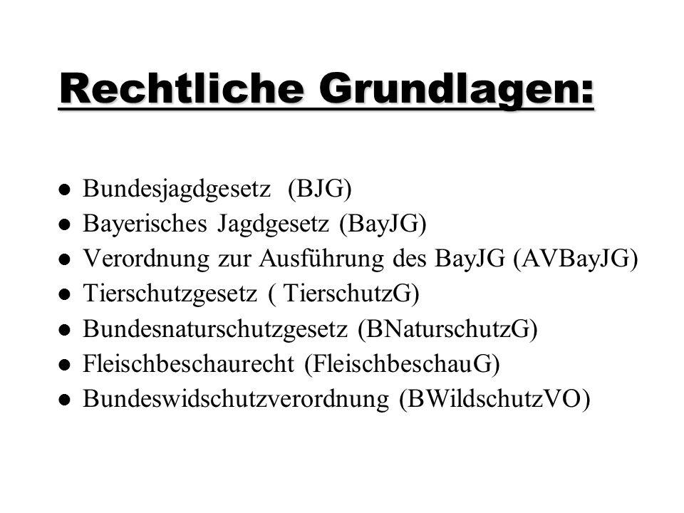Rechtliche Grundlagen: Bundesjagdgesetz (BJG) Bayerisches Jagdgesetz (BayJG) Verordnung zur Ausführung des BayJG (AVBayJG) Tierschutzgesetz ( Tierschu