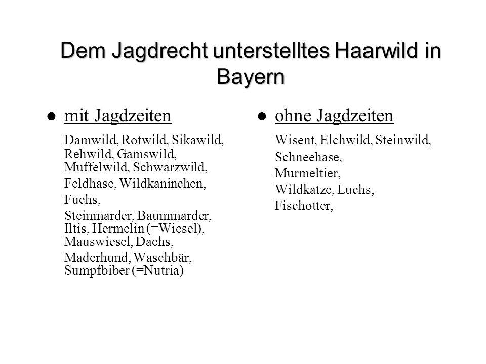 Dem Jagdrecht unterstelltes Haarwild in Bayern mit Jagdzeiten Damwild, Rotwild, Sikawild, Rehwild, Gamswild, Muffelwild, Schwarzwild, Feldhase, Wildka