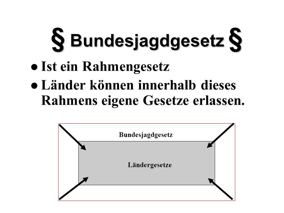 Allgemeine Vorschriften im Zusammenhang mit der Jagdausübung Sachliche Gebote und Verbote § 19 BJG Art.
