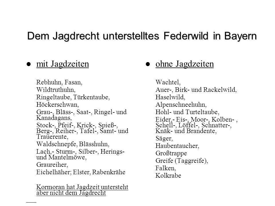 Dem Jagdrecht unterstelltes Federwild in Bayern mit Jagdzeiten Rebhuhn, Fasan, Wildtruthuhn, Ringeltaube, Türkentaube, Höckerschwan, Grau-, Bläss-, Sa