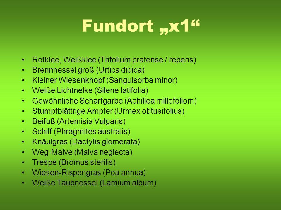 Fundort x1 Rotklee, Weißklee (Trifolium pratense / repens) Brennnessel groß (Urtica dioica) Kleiner Wiesenknopf (Sanguisorba minor) Weiße Lichtnelke (
