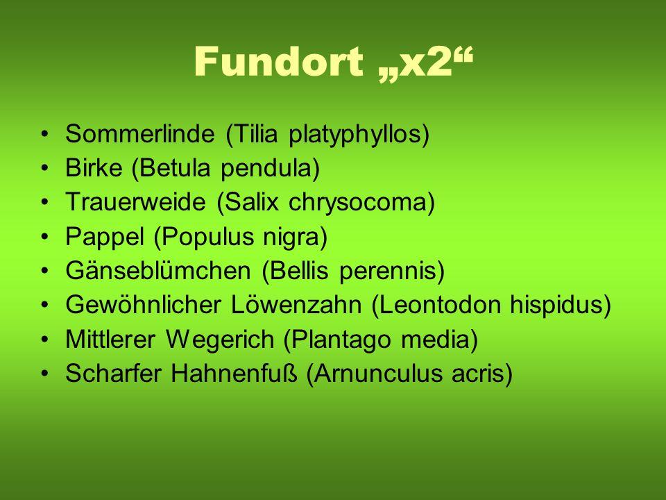 Fundort x2 Sommerlinde (Tilia platyphyllos) Birke (Betula pendula) Trauerweide (Salix chrysocoma) Pappel (Populus nigra) Gänseblümchen (Bellis perenni