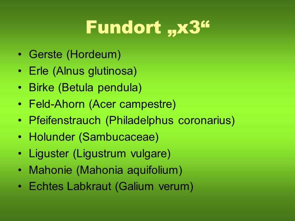 Fundort x3 Gerste (Hordeum) Erle (Alnus glutinosa) Birke (Betula pendula) Feld-Ahorn (Acer campestre) Pfeifenstrauch (Philadelphus coronarius) Holunde