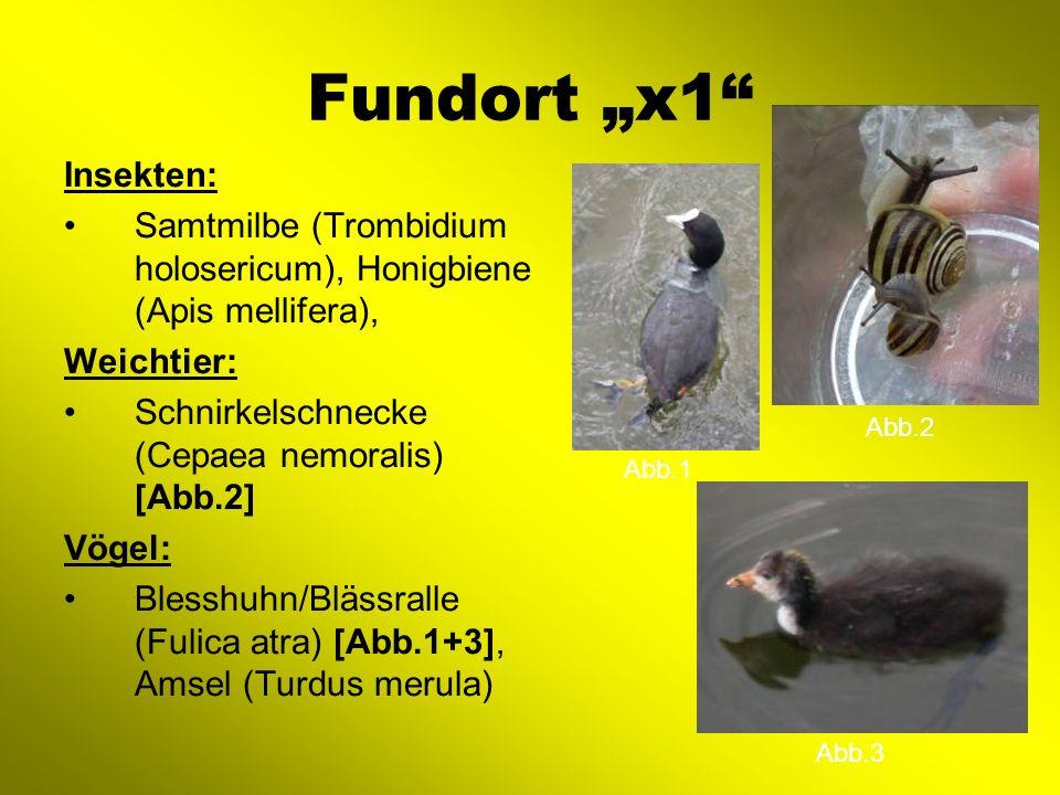 Fundort x2 Insekten: Hufeisen-Azurjungfer (Coenagrion puella), Hummel (Bombus lapidarius) Weichtier: Zwergdeckelschnecke (Potamopyrgus antipodarum) Vögel Stockente (Anas platyrhynchos)[Abb.1], Kohlmeise (Parus major), Haussperling (Passer domesticus)[Abb.3], Feldsperling (Passer montanus) Säugetier: Rotes Eichhörnchen (Sciurus vulgaris) [Abb.2] Abb.1 Abb.2 Abb.3
