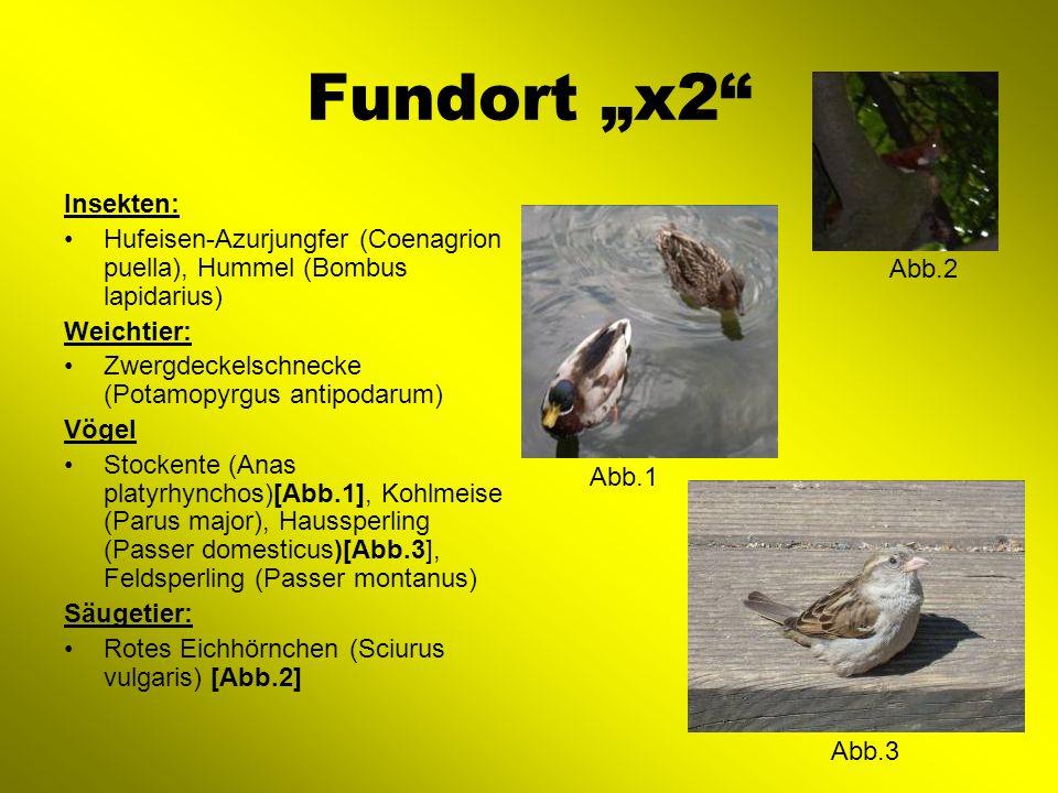 Fundort x3 Insekten: Zweipunkt-Marienkäfer (Adalia Bipunctata-Form), Wasserfloh (Daphnia pulex)[Abb.2], Steinläufer (Lithobius forficatus) Weichtier: Zwergdeckelschnecke (Potamopyrgus antipodarum) Vögel: Graureier (Ardea cinerea)[Abb.1], Haubentaucher (Podiceps cristatus) Abb.1 Abb.2